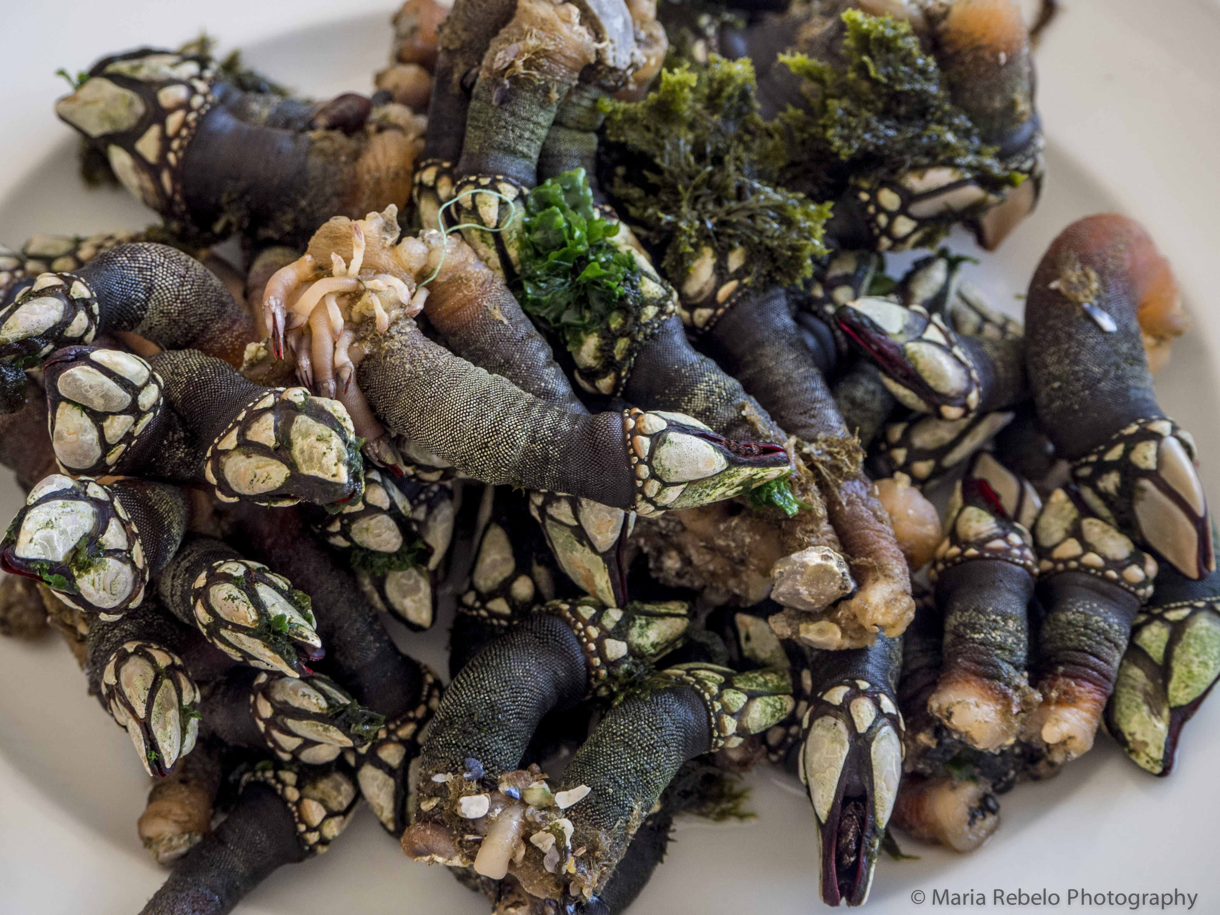 Percebes salt of portugal for Expensive fish to eat