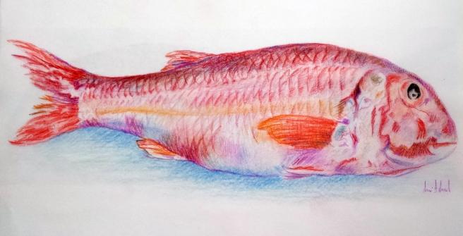 Desenho RBD_20140826_salmonete