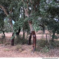 The generosity of cork oaks — Salt of Portugal