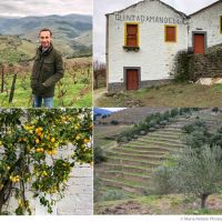 The wines of Wine & Soul — Salt of Portugal